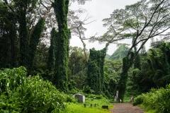hawaii-manoa_falls-3