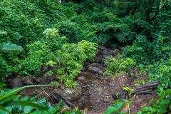 hawaii-manoa_falls-5