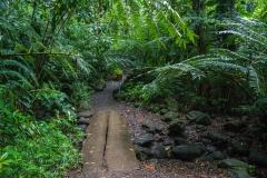 hawaii-manoa_falls-6