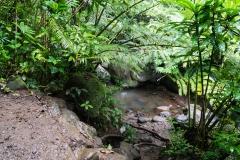 hawaii-manoa_falls-8