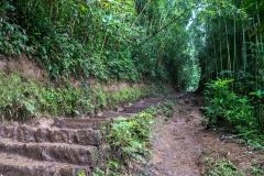 hawaii-manoa_falls-9